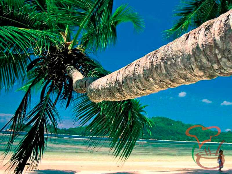 Where to go and what to try: Seychelles